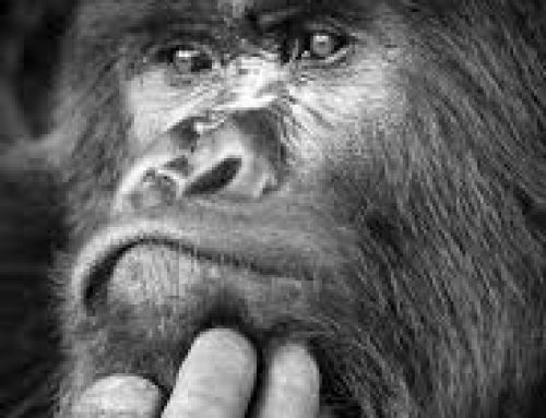 The gorilla beating on our chests is finally visible: The discovery of Epigenetic Gene in Trauma impacting our immune system